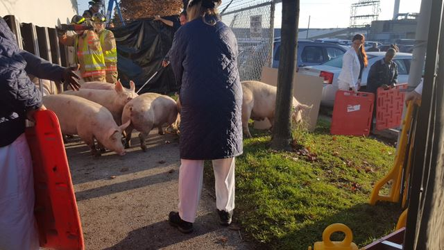 Pig busters blog