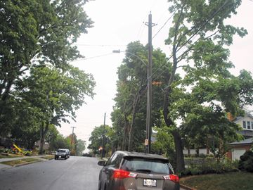 Mature trees on Carleton Street South