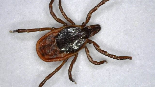 Keep your summer free of tick bites: province