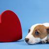 Adopt a Heart