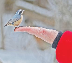 Bird count Dec. 27