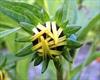 PHOTOS: Urquhart Butterfly Garden