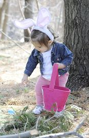 Fifteen month old Daniella Roppo  checks out each coloured egg before putting it in her basket, during the easter egg hunt.