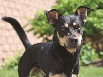 Adopt-A-Pet: Argo needs a home