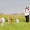 Whitby residents reminded to keep dogs on leash in public