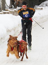 The Kearney Dog Sled Races celebrated 20 years during on Feb. 8 and 9 and organizers, countless volunteers, mushers and many dogs did not disappoint.