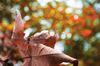 Fall Colours Photo Contest