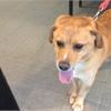 Adopt A Pet: Clifford needs a home