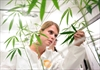 'Good bugs' weed out pests at pot facility-Image1