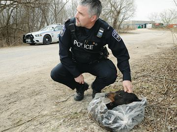 Bear carcass dumped in Barrie, cops investigating