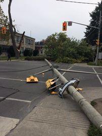 Fallen tree, streetlight