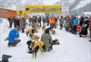 Musher says long road ahead in sled-dog race-Image1