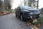 Tree hits car on Lakeshore Rd