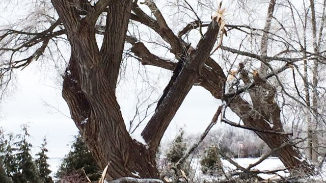 Willow Beach Ontario >> March ice storm caused $25-million in damage in southern Ontario | YorkRegion.com