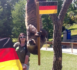 World-Cup picker sloth to be honoured-Image1