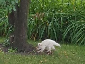 Unusual animal spotted