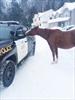 Rogue horses Bracebridge