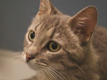 Pet of the week — Max