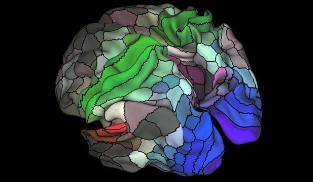 Decoding the brain