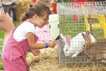 Bunnies at the Blackstock Fair