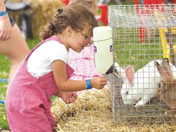 Bunnies at the Blackstock Fair