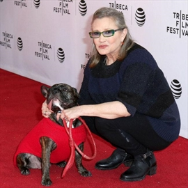 Carrie Fisher's dog Gary finds permanent home-Image1