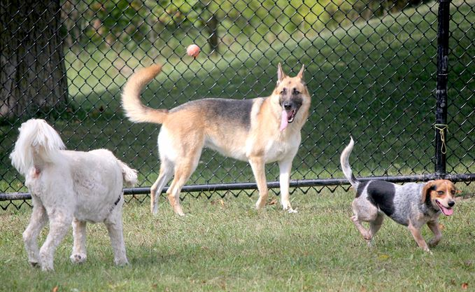 What's going on here? Tails wagging at new dog park in Guelph