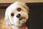 PETS PAUSE: Rescuing Otis - a feel-good story