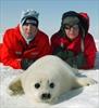 Paul McCartney weighs in on seal hunt again-Image1
