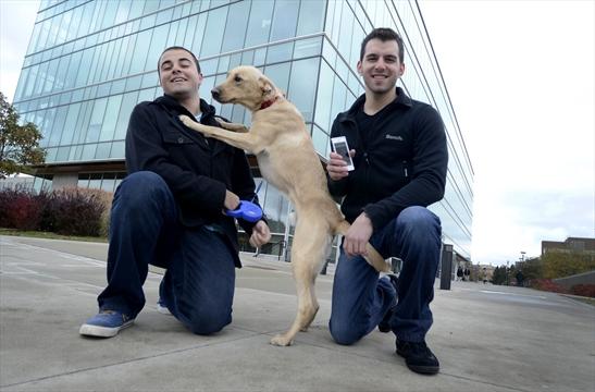 Dog Friendly Rentals Hamilton