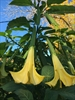 RENWALD:Tropical Plants