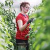 New provincial funding for greenhouse operators announced as minister tours Durham farm