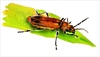 Soldier beetles are part of nature's pest control crew.