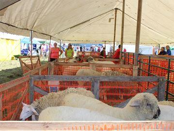 Dunnville fair