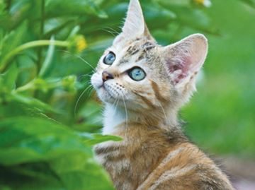 Orillia council ponders cat bylaw