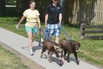 Dog walk Cannington