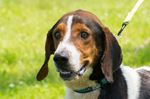 Take the pledge: 'No Hot Pets'