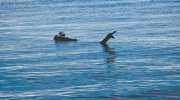 Footage Appears to Show Canada's Legendary '60ft-long' Lake Monster Ogopogo F7c150e94971a2a0a0636406e2e7_Content