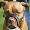 Toronto Star's View: Ontario's pit bull ban is working and mustn't be repealed
