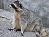 7 ways to help Toronto's wildlife