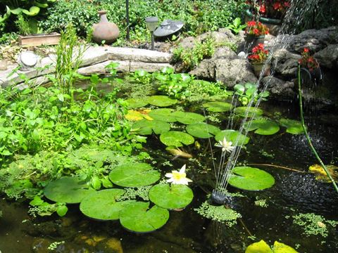 No rules around backyard ponds but safety questions for Garden pond questions