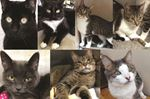 Five of seven Oakville cats sent to Guelph find homes