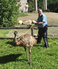 Emu found wandering southwestern Ontario roads-Image1