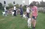 4-H Goat Club prepares for fair