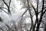 Ice storm December 2013