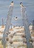 Maggie Atkinson art work