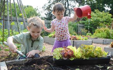 Lettuce Garden On Weller Street