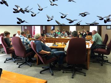 The pigeon problem continues to hang over council