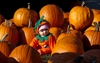Canada capitalizes on U.S. pumpkin shortage-Image1