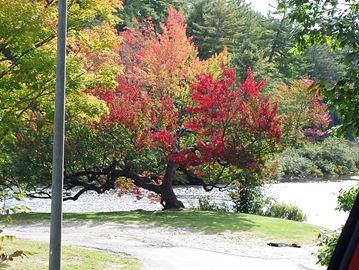 Leaf colour progression 2016
